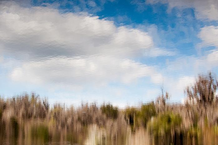 La Chua Trail- Paynes Praire Watershed